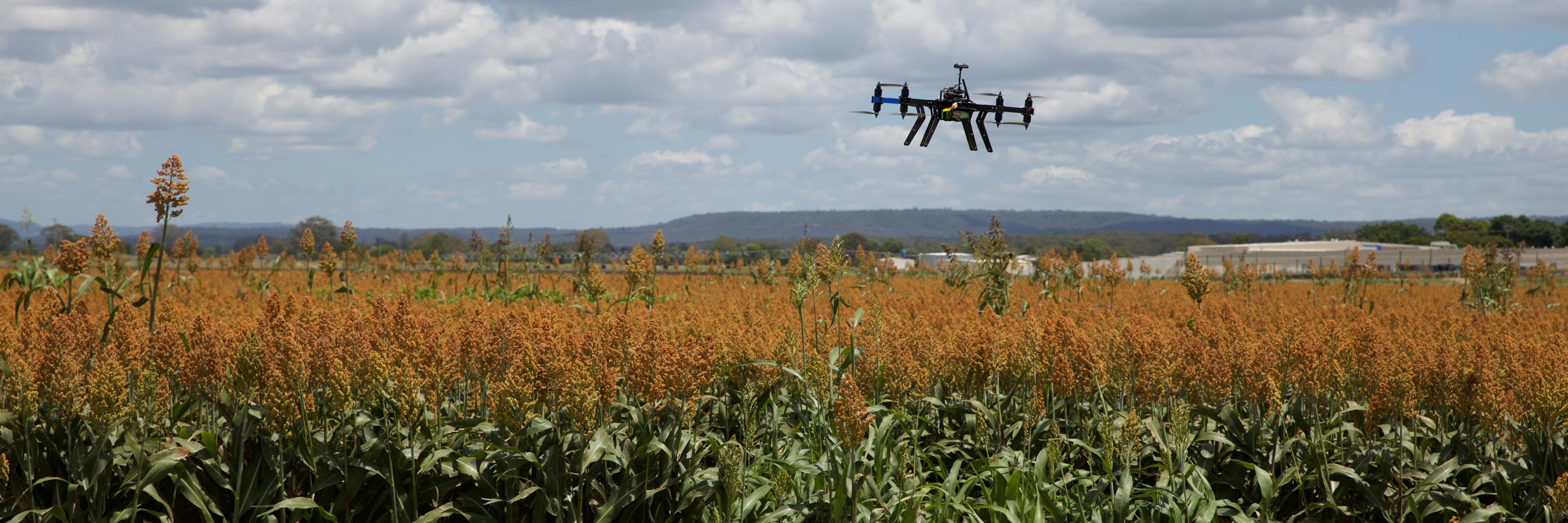 Drone flies over a field of crops